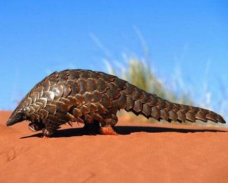 imagenes de animales del desierto para dibujar