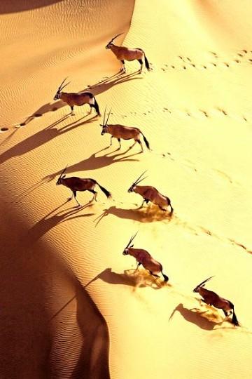 imagenes de animales del desierto para imprimir