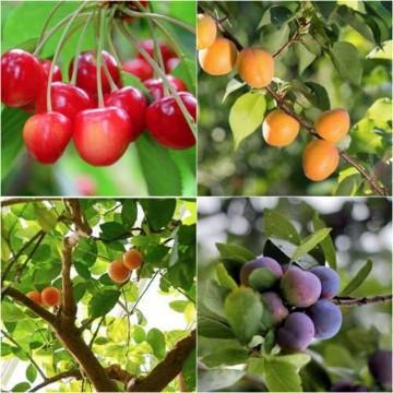 imagenes de arboles frutales animados