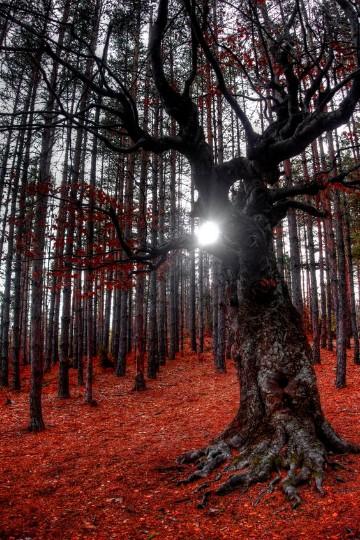 imagenes de arboles secos significado