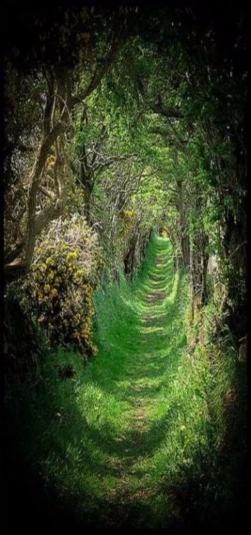 imagenes de bosques encantados reales