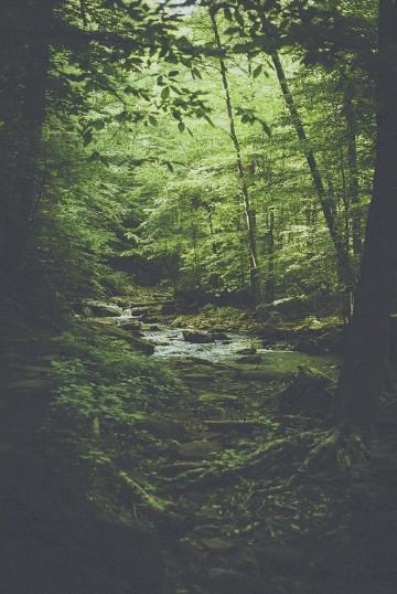 imagenes de bosques hermosos del mundo