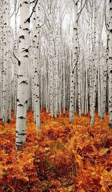 imagenes de bosques hermosos encantados