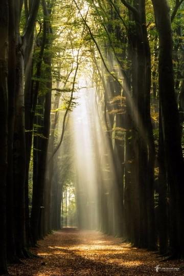 imagenes de bosques hermosos hd