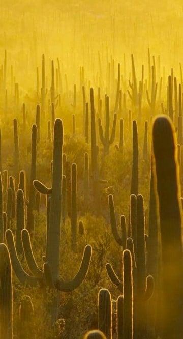imagenes de clima seco humedo