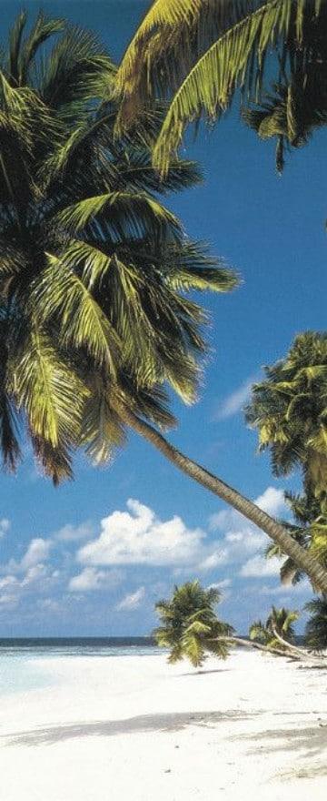 imagenes de clima tropical subtropical