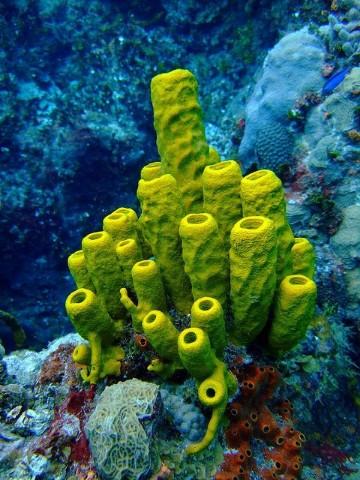 imagenes de esponjas de mar caracteristicas