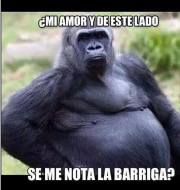 imagenes de gorilas chistosos graciosas