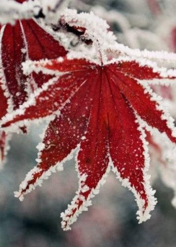 imagenes de invierno bonitas animadas