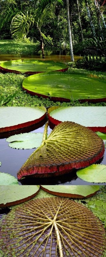 imagenes de la amazonia ecuatoriana