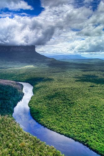 imagenes de la amazonia para dibujar