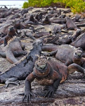 imagenes de las islas galapagos animales