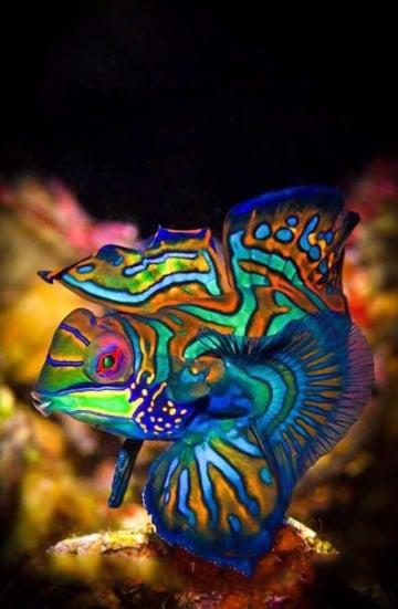 imagenes de peces en el mar animados
