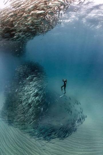 imagenes de peces en el mar en movimiento