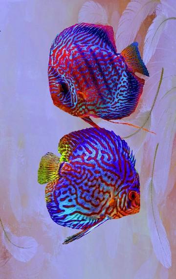 imagenes de peces en el mar para colorear