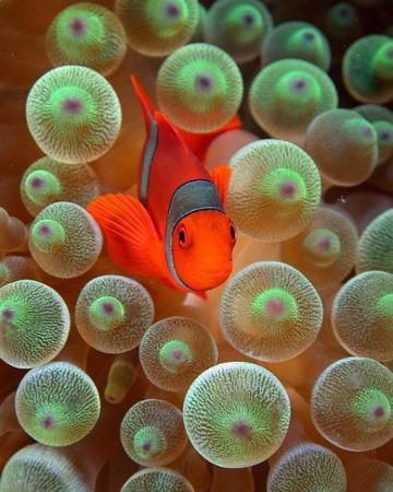 imagenes de peces en el mar peruano