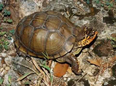 imagenes de tortugas de tierra bebes
