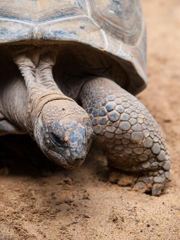 imagenes de tortugas de tierra marinas