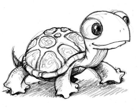 imagenes de tortugas para dibujar marinas