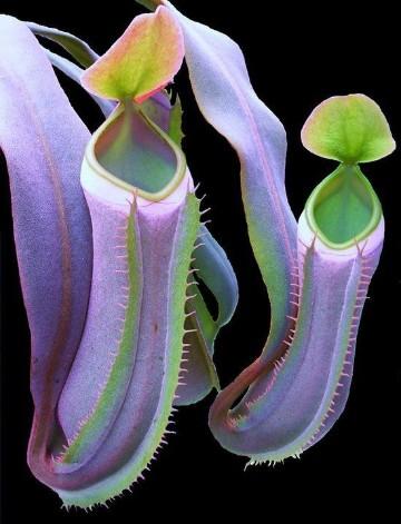 plantas carnivoras reales tipos