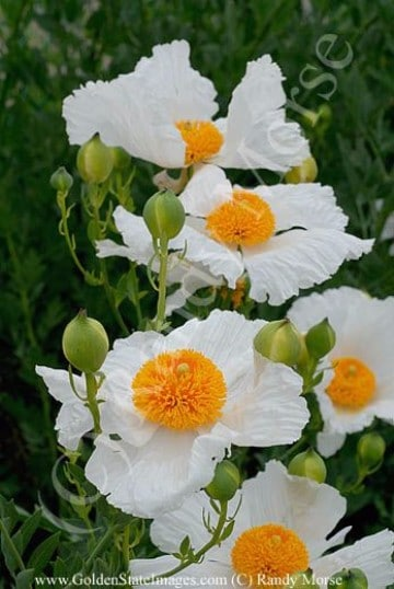 plantas ornamentales de exterior especies comunes