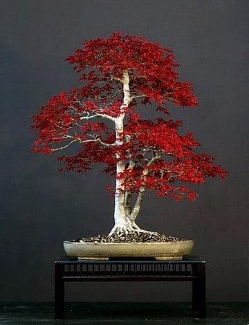 Plantas ornamentales de exterior resistentes a todo - Plantas perennes exterior ...