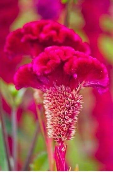 Plantas ornamentales de exterior resistentes a todo for Plantas de exterior resistentes