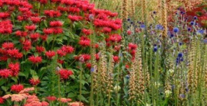 Plantas para exterior resistentes interesting el geranio - Planta de exterior resistente ...