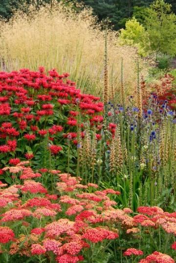 Plantas ornamentales de exterior resistentes a todo for Arbustos ornamentales de exterior
