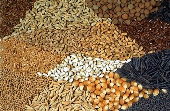 tipos de semillas comestibles medicinales