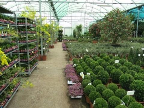 viveros de plantas ornamentales en bogota