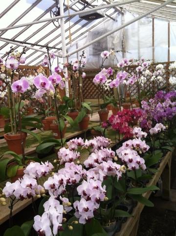 viveros de plantas ornamentales manejo