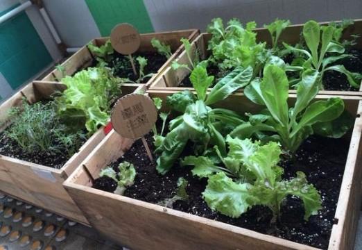 viveros de plantas ornamentales para el jardin imagenes