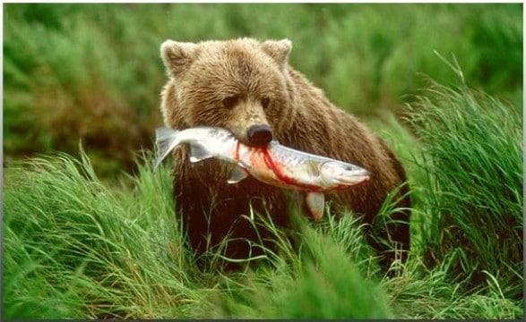 10 animales omnivoros imagenes