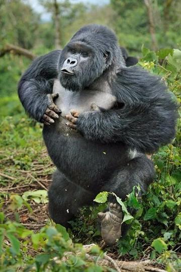 animales que habitan en la selva humeda