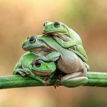 animales que habitan en la selva peruana