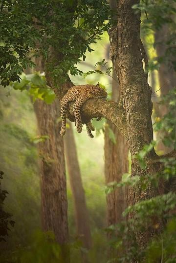animales que habitan en la selva tropical