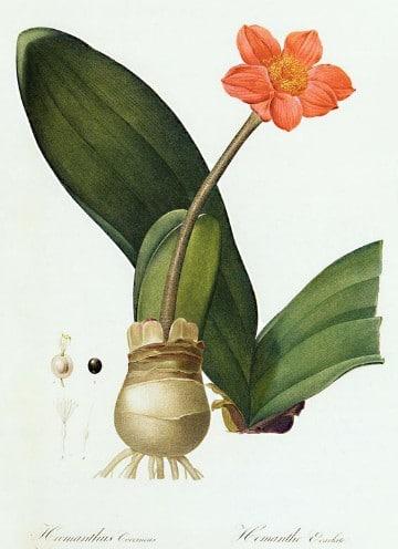 dibujos de plantas medicinales imagenes