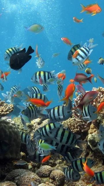 fotos de peces de mar imagenes