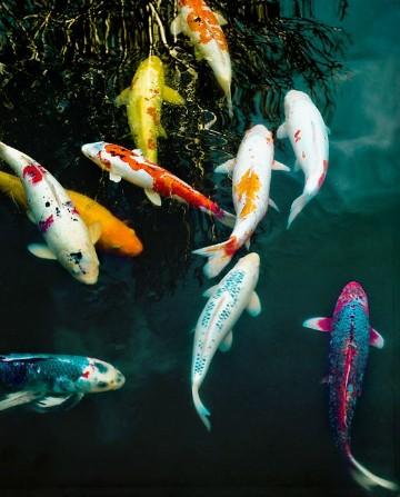 fotos de peces de mar rio