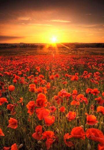 imagenes de campos con flores hermosas