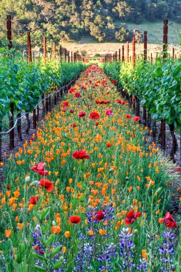 imagenes de campos con flores verdes