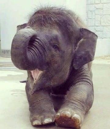 Imagenes de elefantes bebes e infantiles para ni os - Fotos de elefantes bebes ...