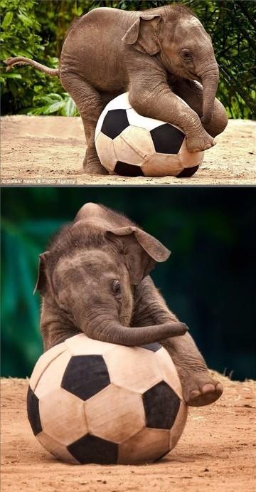 imagenes de elefantes bebes tiernos