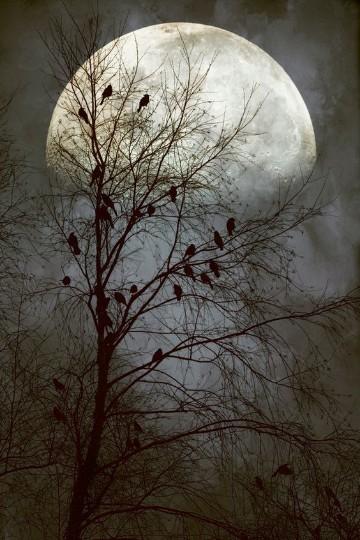 imagenes de lunas hermosas bonitas