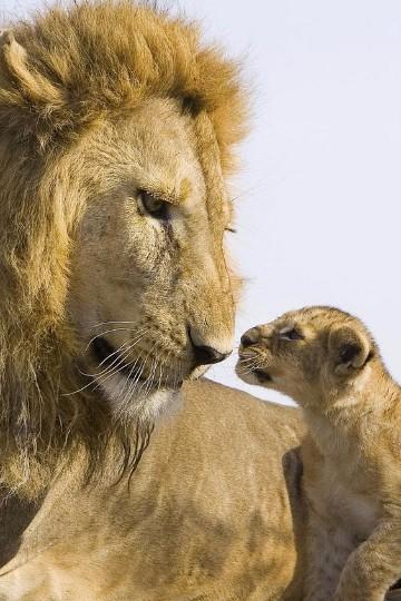 leonas con sus crias para descargar
