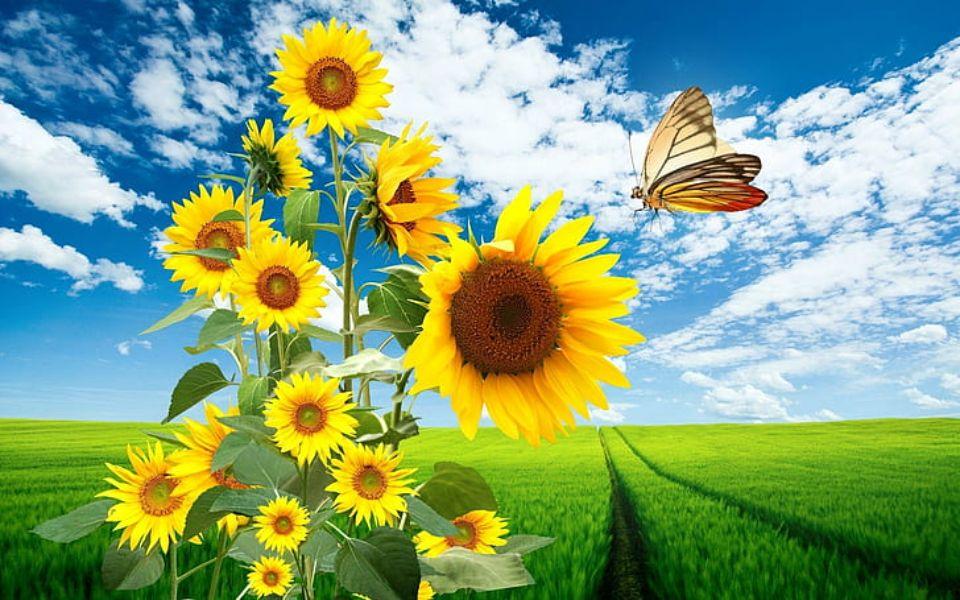 paisajes con mariposas reales para decorar pantallas