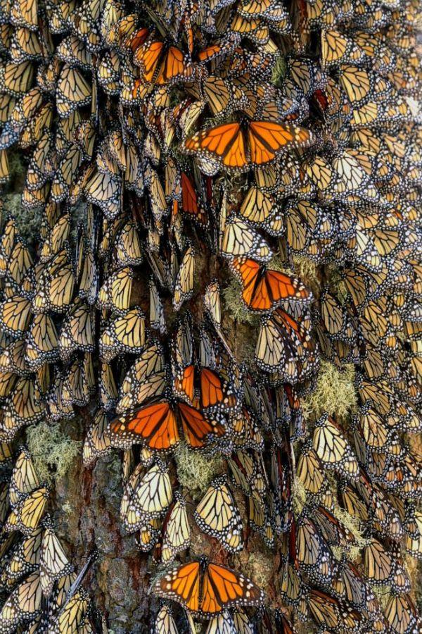 paisajes con mariposas reales santuario