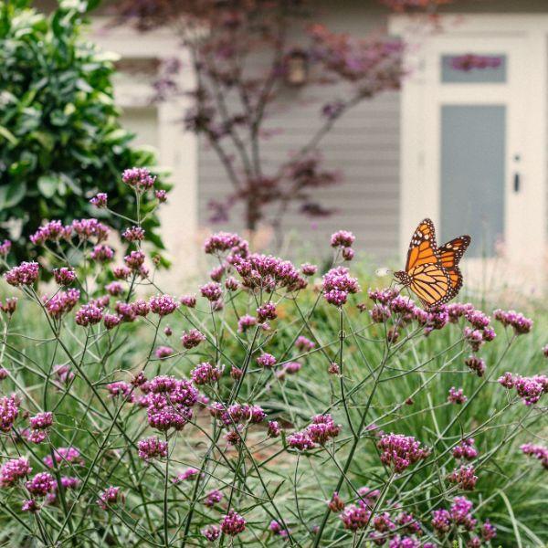 paisajes de flores y mariposas citadinos