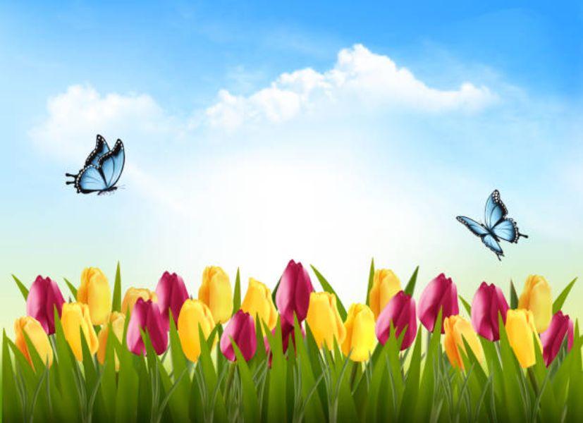 paisajes de flores y mariposas dibujos